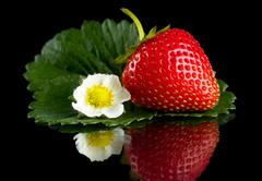 Macro whole strawberry with leaf and flower isolated on black background Stock Photos