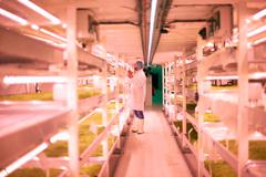 Worker tending micro greens in underground tunnel nursery, London, UK Stock Photos