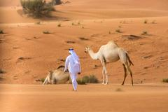 Middle eastern man wearing traditional clothes walking toward camels in desert, Stock Photos