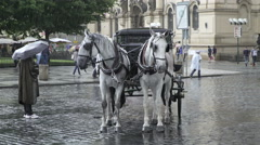 White Horses Carriage On Rainy Summer Day In Prague. Stock Footage