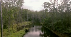 Fying over Australian rainforest creek Stock Footage
