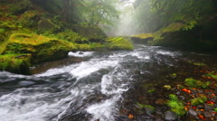 River Kamenice in autumn, Bohemian Switzerland Stock Footage