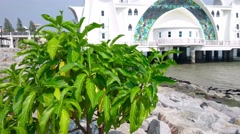 The Straits Mosque (Masjid Selat) at Malacca, Malaysia. Slide Up - stock footage