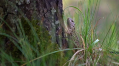 Small lizard beside birch Stock Footage