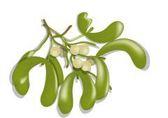 mistletoe on white - stock illustration