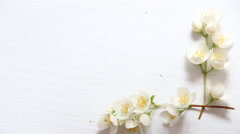 Flowers frame on white wooden background. With copy space Stock Footage