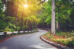 Beautiful landscape with asphalt road,green forest and road sign Stock Photos
