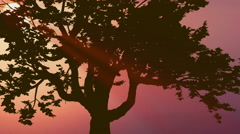 The beautiful tree against the background of sunset. Real time capture Stock Footage
