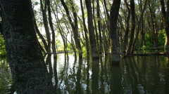 Danube floodplain forest during floods Stock Footage