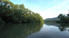 Danube floodplain forest during floods Stock Footage