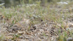 Ants in a Row - stock footage