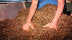 Women work at the tea factory in Nuwara Eliya, Sri Lanka. Stock Footage
