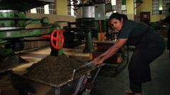 Man works with the old tea cutting machine in Nuwara Eliya, Sri Lanka. Stock Footage