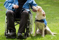 Labrador guide dog and his disabled owner Stock Photos