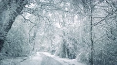 Snow Falling On Road Through Woods Stock Footage