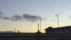 Choreographic murmuration of starlings in Belfast, Northern Ireland, UK - stock footage