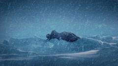 Strange Alien Object In The Snow Stock Footage