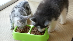 Cute puppy and kitten eating dry food together,slow motion Stock Footage