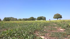 child running to camera with flowers in sunny clear day - stock footage