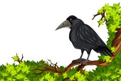 Crow standing on branch Stock Illustration