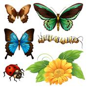 Different kind of butterflies and bugs Stock Illustration
