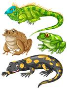 Different kind of frogs and lizards Stock Illustration