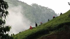 People collect tea at the plantation in Nuwara Eliya, Sri Lanka. Timelapse. Stock Footage