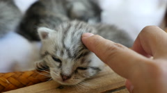 Cute tabby kitten with owner hand Stock Footage