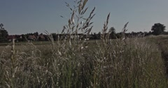 A slow motion shot through blades of grass on a meadow with trees and a village  - stock footage