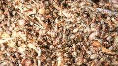 New ant colony start building  new anthill. Ant colony is the basic family unit Stock Footage