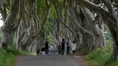 The Dark Hedges, a tourist attraction in Northern Ireland - stock footage