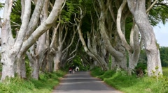 The Dark Hedges, a tourist attraction in Northern Ireland Stock Footage