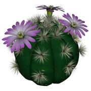 Cactus with flowers - 3D render - stock illustration