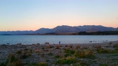 Lupins At Lake Tekapo, New Zealand During Sunrise Stock Footage
