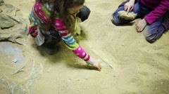 Two girls dig together in dry sand bones of dinosaurs Stock Footage