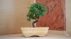 Beautiful Bonsai on floor in clay pot in apartment Stock Footage