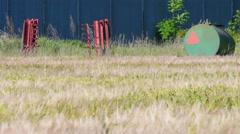 Farmland with Barley, Hordeum vulgar L  ripening in the summer sun in Sweden Stock Footage