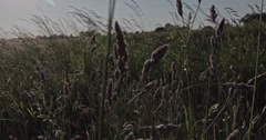 A slow motion shot through blades of grass on a meadow at the countryside. - stock footage