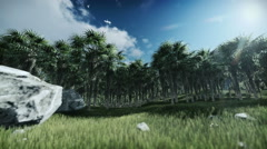 Oil Palm Tree Plantation against timelapse clouds Stock Footage