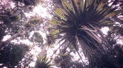 Wild bromeliads on the trees Stock Footage