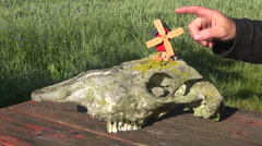 Windmill toy and horse skull outdoors Stock Footage