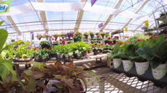 Abundance of colorful flowers at the garden center in Early Summer. Stock Footage