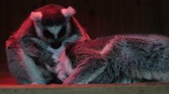 Playful animals Multiscreen footage Stock Footage