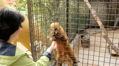 Woman feeding an animal in a zoo Stock Footage