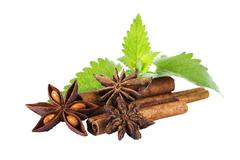 star anise cinnamon and peppermint - stock photo