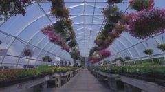 4k pov in a greenhouse Stock Footage