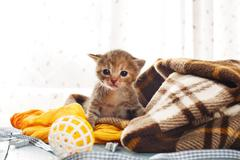 Grey striped newborn kitten in a plaid blanket Stock Photos