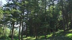 Pine woodland on hillside generic nature beauty Stock Footage