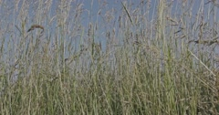 A slow motion shot through blades of grass on a meadow with trees in the backgro - stock footage