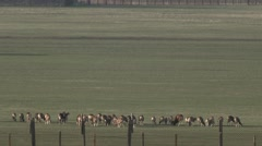 Group of Animals Moving Across the Field Far Away Over the Fence Stock Footage